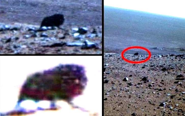 На Марсе нашли загадочное существо