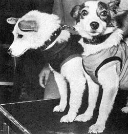 Собаки в космосе картинка