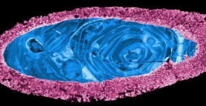 В Австралии обнаружили самый древний в мире метеоритный кратер