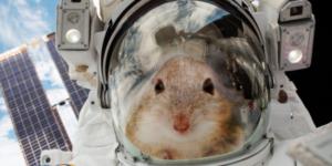 Российские ученые запустят в космос «Ноев ковчег»