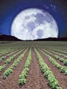 Лунный календарь садовода и огородника на октябрь 2020 года
